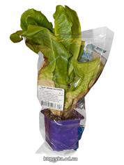 Салат листовий Гурман у горщику