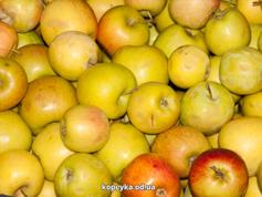 Яблука селеста