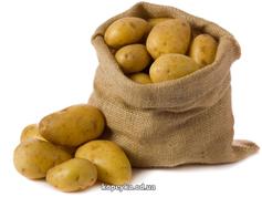 Картопля біла Украина