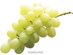 Виноград білий киш-миш
