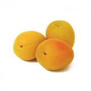 Абрикос ананасний Україна