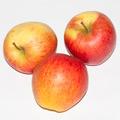 Яблука пінова