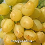 Виноград аркадія Україна