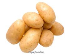 Картопля молода біла