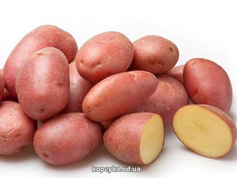 Картопля рожева молода