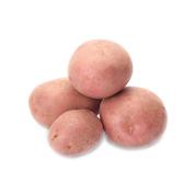 Картопля белоросса